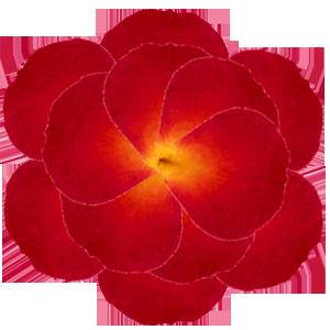 The fae wings flower spells rose for Individual rose petals